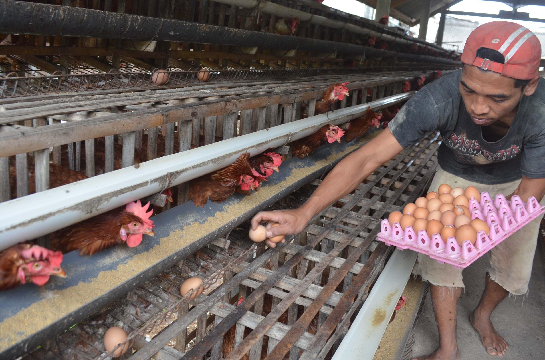 Peluang Usaha Baru di Bandung Modal Minim Peluang Usaha di Pedesaan Bandung